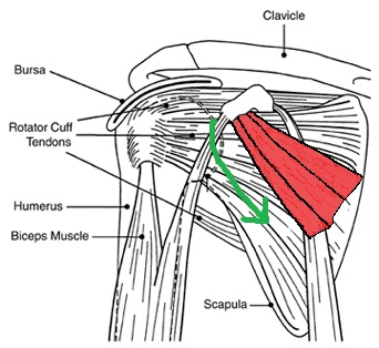 Portland doctor for shoulder pain