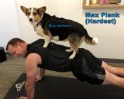 Plank dog